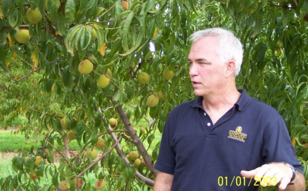 fifer and longview pat martin learns about green peaches